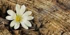 Древесные ароматы для ароматизации помещений