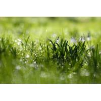 Скошенная трава, аромат-ароматизатор